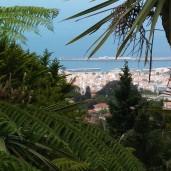 Blick vom Botanischen Garten auf Funchal