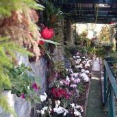 Funchal (4)