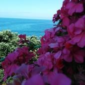 Jardim do Mar (2)