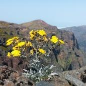 Pico do Areeiro Wanderung (2)