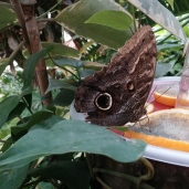 Sassnitz - Schmetterlingspark