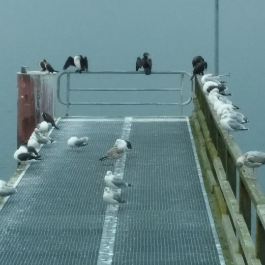 Göhren Seebrücke