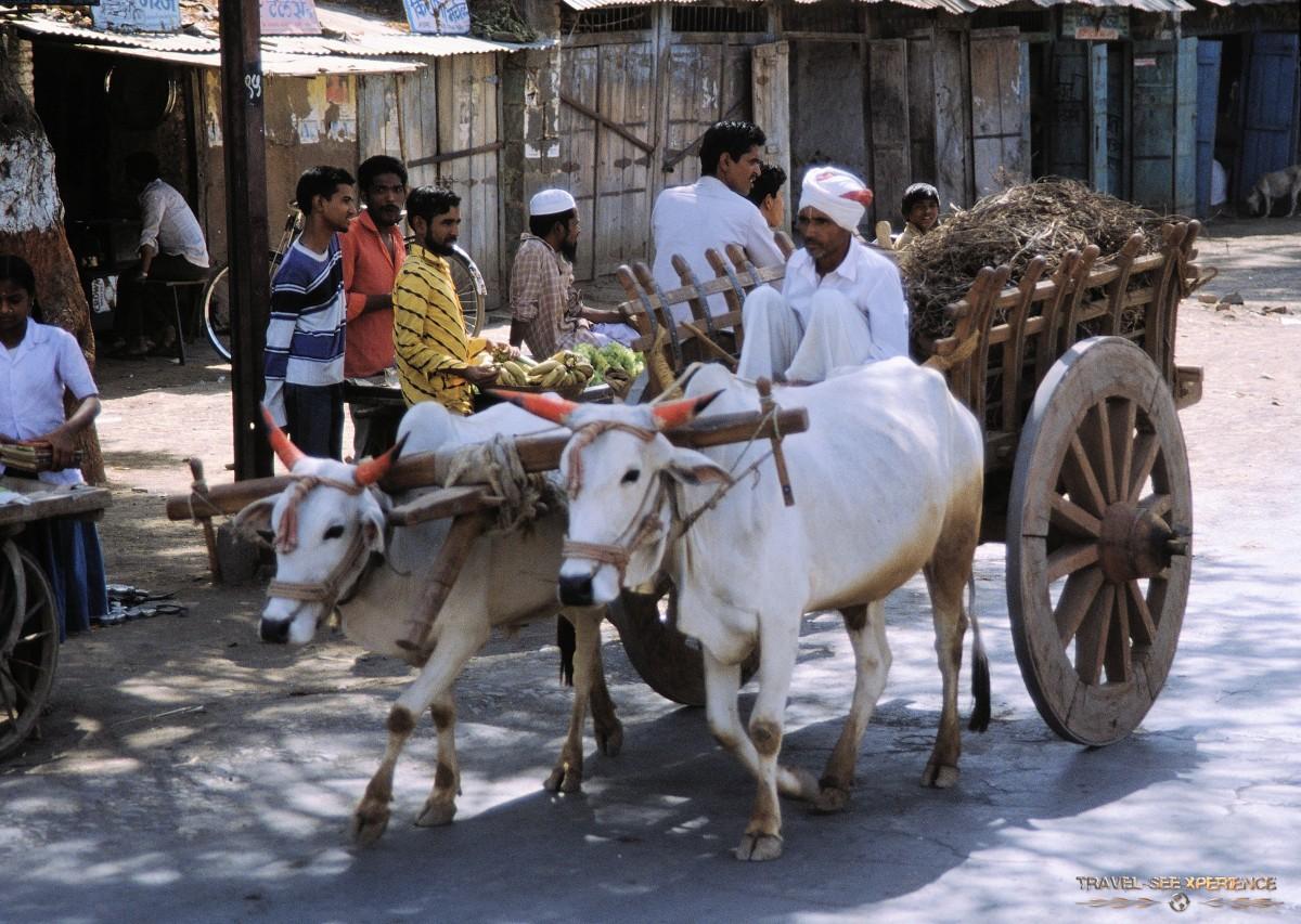 Mumbai – Mandu